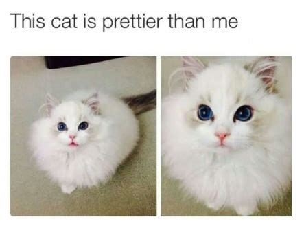 pretty cats Quotes