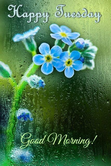 Rainy Happy Tuesday Good Morning Quote Pictures, Photos ...