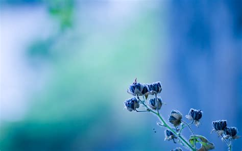 Rare Flowers Wallpapers | HD Wallpapers | ID #9000