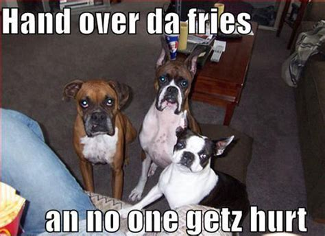 Really Funny Pictures Of Dogs | Funny Collection World