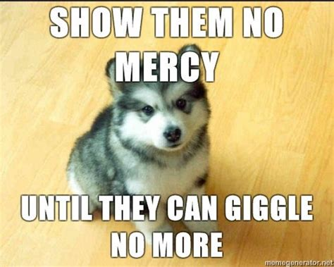 Ridiculously Funny Animal Memes for 2013   Animals Zone