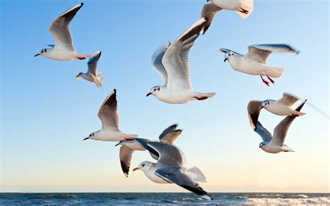 Seagulls Wallpapers | HD Wallpapers | ID #16375