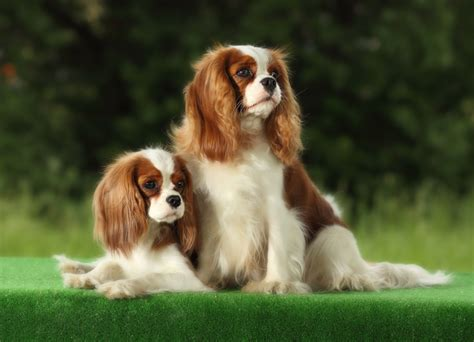 Small Dog Breeds | 101DogBreeds