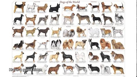 Small Dog Breeds List A Z