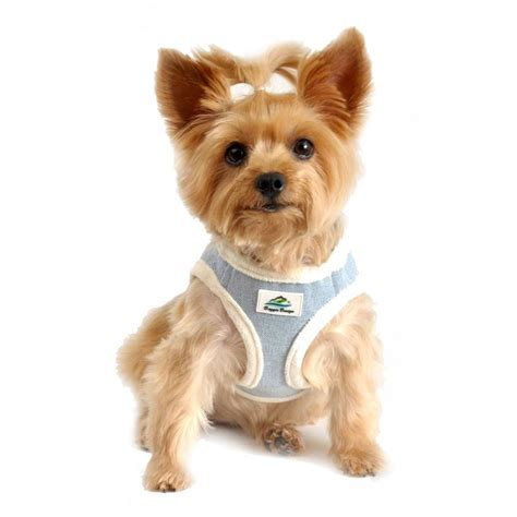 Small Dog Harnesses For Dogs, Small, Get Free Image About ...