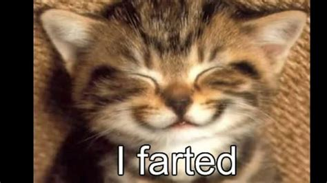 SO FUNNY YOU WILL FART  cat memes    YouTube