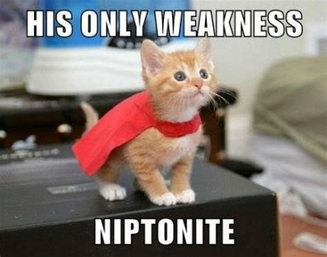 Super Kitty's Only Weakness Cat Meme   Cat Planet | Cat Planet