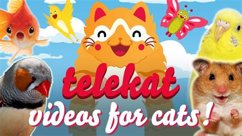 TELEKAT | Super cute animal videos for cats to watch ...