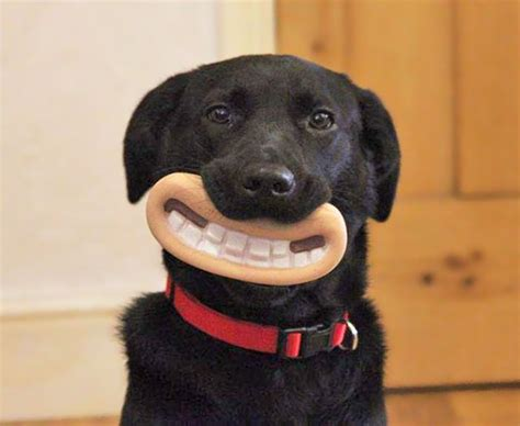 The 15 Funniest Dogs You ve Ever Seen   Funny   BabaMail