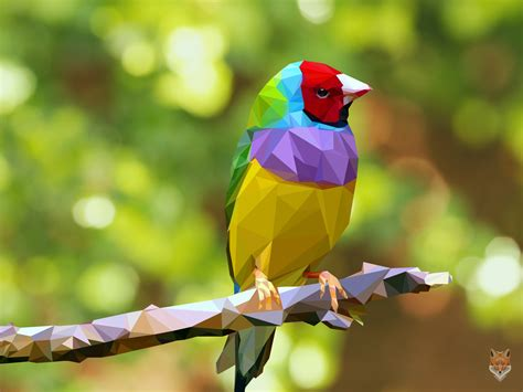 The colorful bird / vector / diego campos by diego1a on ...