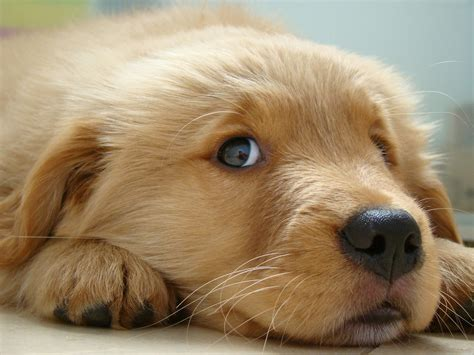 The Cutest Puppies in the World  18 photos