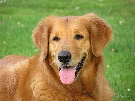 The Dog | Friendly Animal Fun & Interesting Facts ...