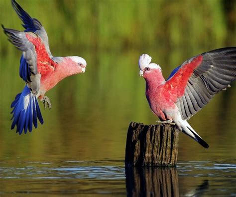 The Gallery Of 15 Most Beautiful Birds | MostBeautifulThings
