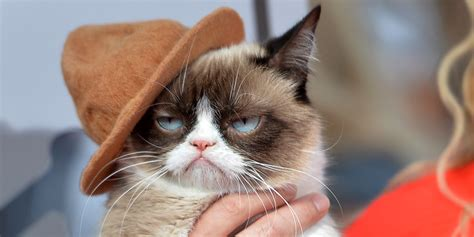 The Grumpy Cat Movie Trailer Is Here