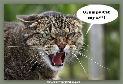 The REAL Grumpy Cat! | Comical (& Cute) Cats | Pinterest