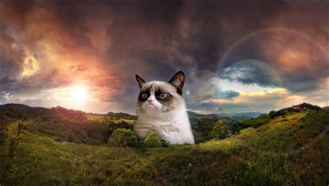 The rise and fall of Grumpy Cat and other Internet ...