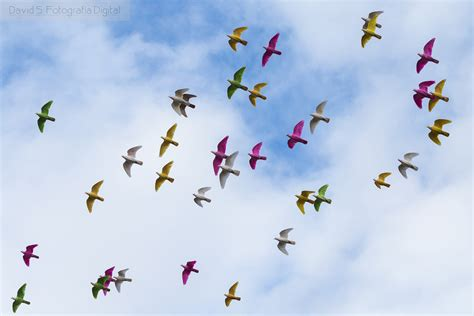 The World s Best Photos of aves and bandada   Flickr Hive Mind