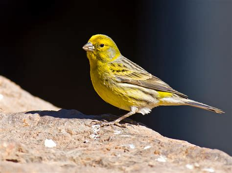 The world s economic  canary in the coal mine  is stuck ...