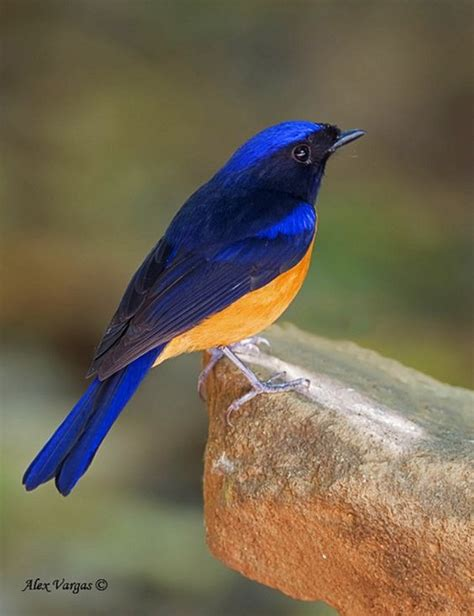 Today s mystery bird for you to identify | Nature, Old ...