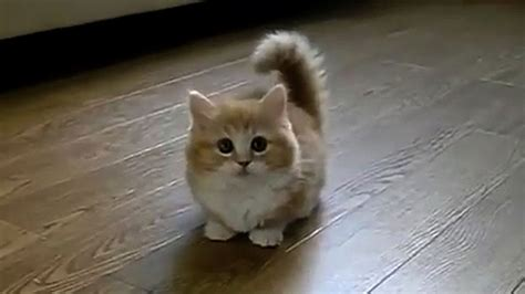 TOP 10 BEST CAT VIDEOS OF ALL TIME!   YouTube