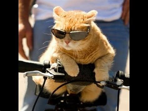 Top 10 Funniest Cat Pictures   YouTube