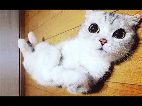 Top 10 FUNNIEST Cat Videos   Best Of FUNNY CATS 2017   YouTube