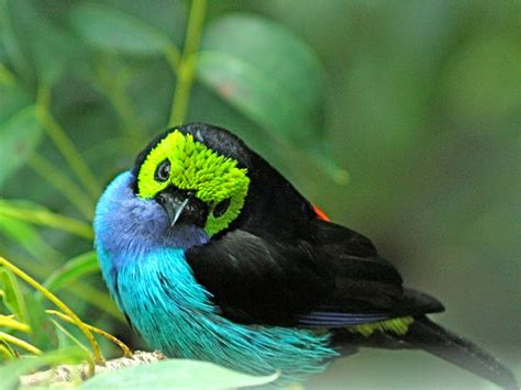TOP 10 Most Beautiful Birds In The World   Tapandaola111
