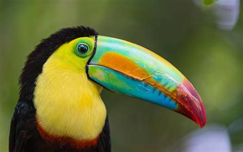 Top 10 Most Colourful and Tropical Bird Species   YouTube