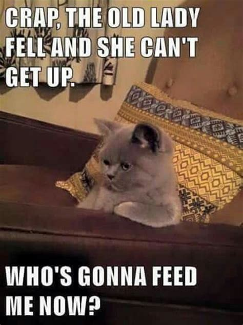 Top 30 Funny Cat Memes – Quotes Words Sayings