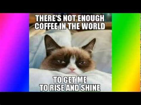 Top 50 funniest and best grumpy cat memes   YouTube