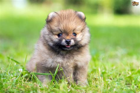 Top tips for picking the ideal small breed dog for you ...
