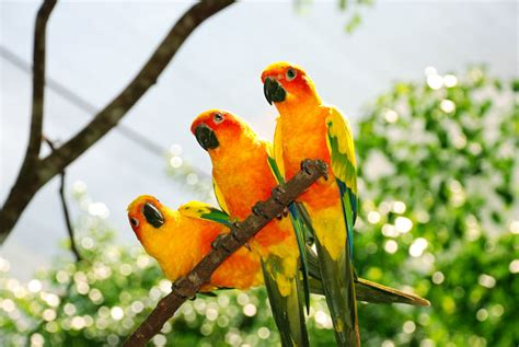 Tropical Birds by Jase92 on DeviantArt
