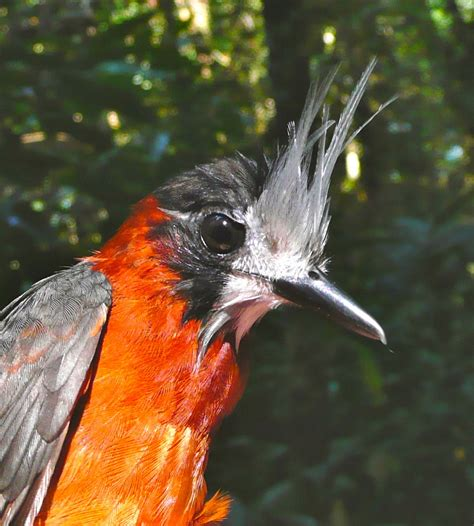 Tropical birds return to harvested rainforest areas in ...