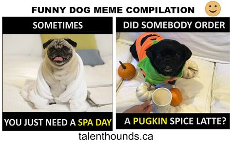 Try Not to Laugh at this Funny Dog Meme Compilation Video ...