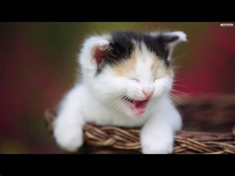Try Not to Laugh or Grin Clean  Skip 1:04  | FunnyCat.TV