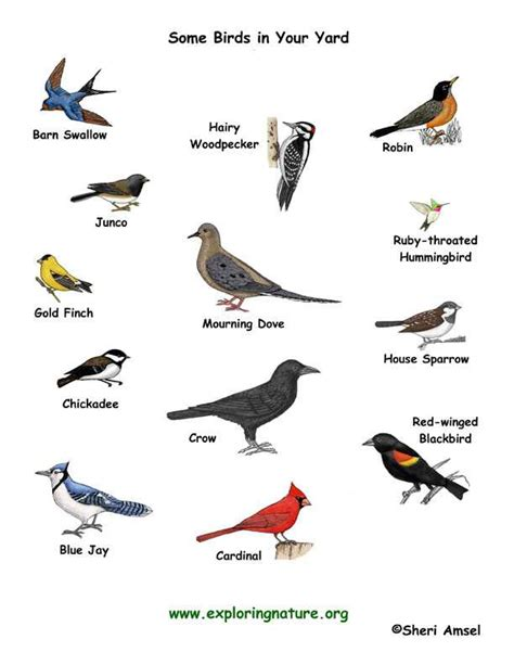 types of birds   general information
