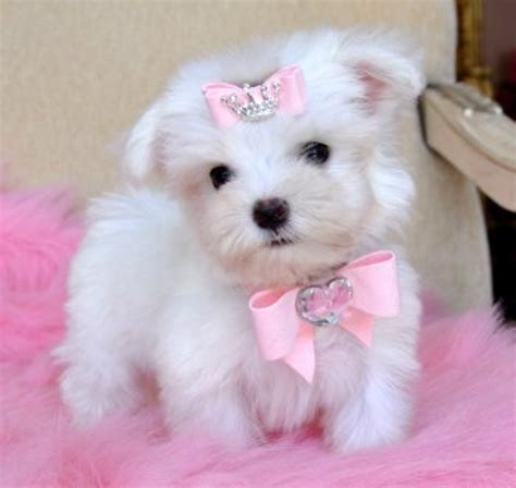 Uk Only Pets For Sale Dogs For Sale Free Puppies ...