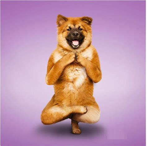 Very Funny Picture...Funny Yoga Dogs