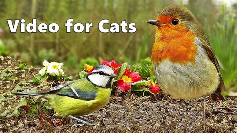 Videos for Cats to Watch : Bird Sounds & Song Extravaganza ...