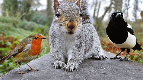 Videos for Cats to Watch   Birds and Squirrel Fun in ...