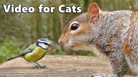 Videos for Cats to Watch : Birds Chirping and Squirrels ...