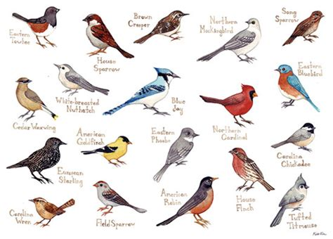What are the different types of singing birds? What are ...
