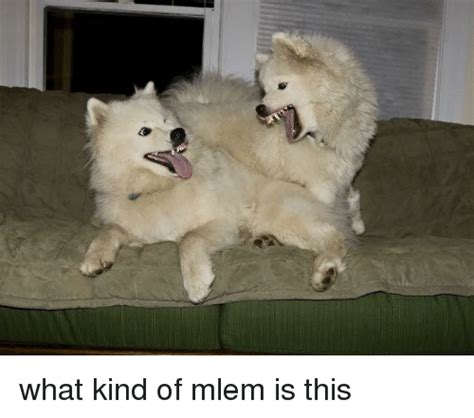 What Kind of Mlem Is This | Dank Meme on SIZZLE