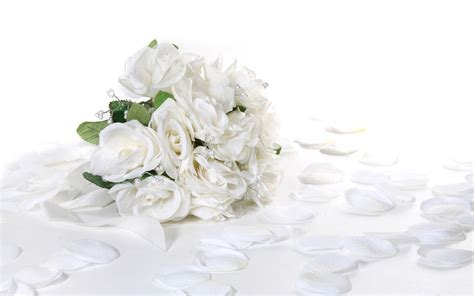 White Rose Wallpapers   Wallpaper Cave