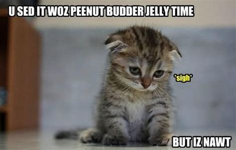 Why don't cats in memes know grammar? Okay, | popculturemom