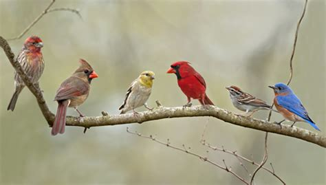 Wild Bird Seed Varieties and Types   AskMax.CountryMax.com