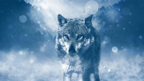 Wild Wolf 4K Wallpapers | HD Wallpapers | ID #19486