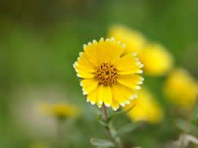 Yellow Flowers Wallpapers HD Pictures – One HD Wallpaper ...